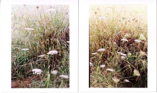driedgrass.jpg