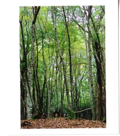 steninthewoods.jpg