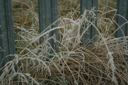 froststraw